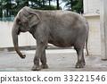 아시아 코끼리의 나나 (오비 히로 동물원) 33221546