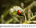 Ladybird with black spots on a green leaf 33223537