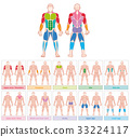 Muscle Groups Colored Chart 33224117