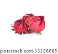 Hibiscus sabdariffa or roselle fruits isolated 33226685