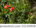Isolated flower on black backround 33230608