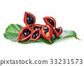 sweet chestnuts (Sterculia monosperma) 33231573