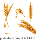 wheat, vector, 3d 33244011