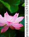bloom, blossom, blossoms 33247400