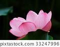 bloom, blossom, blossoms 33247996