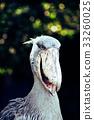 动物 鸟儿 鸟 33260025