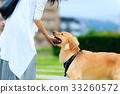 dog, dogs, pet 33260572