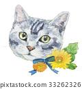 cat, pussy, gerbera 33262326