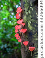 Mushrooms growing in the forest. Pink Fungi Cup. 33266094
