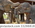TWO HAPPY ELEPHANTS 33266818
