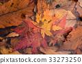 Fallen leaves 33273250