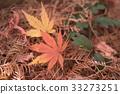 Fallen leaves 33273251