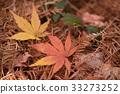 Fallen leaves 33273252
