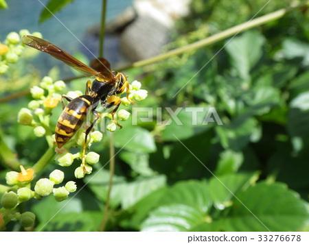 Bộ sưu tập côn trùng 2 - Page 13 33276678