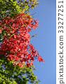 잎, 가을, 단풍 33277251