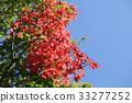 잎, 가을, 단풍 33277252
