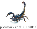 Scorpion isolated on white background 33278011