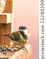 Single male blue tit perched on bird feeder  33280299