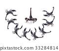 Scorpion on white background 33284814