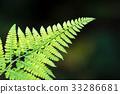 花 新鮮 綠色 33286681