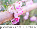 beautiful pink roses growing along the fence 33289432