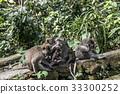 Bali Indonesia Ubud Monkey Forest Family 33300252