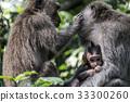 Bali Indonesia Ubud Monkey Forest Family 33300260