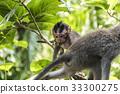 Bali Indonesia Ubud Monkey Forest Baby climbing 33300275