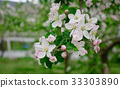 apple, bloom, blossom 33303890