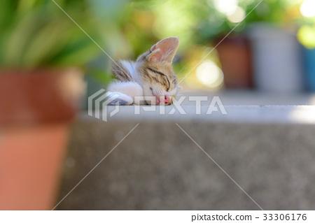 Kitten 2 33306176
