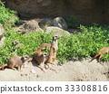 เมียร์แคท,สัตว์,ภาพวาดมือ 33308816
