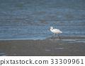 野生鸟类 野鸟 白鹭 33309961