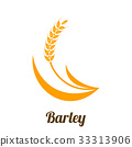 Wheat barley spike yellow isolated 33313906