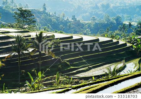 Bali Rice Terraces. 33318703