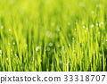 Abstract nature background with grass and drops. 33318707