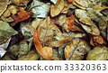 Multicolored fallen leaves laying on the ground. 33320363