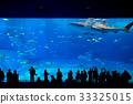 Okinawa Aquarium 33325015