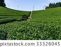 Green Tea farm 33326045
