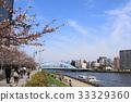 樱花盛开的隅田川长桥 33329360