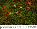 autumn, leaves, autumnal 33339598