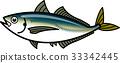 金槍魚 魚 矢量 33342445