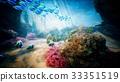 水下 鱼 海 33351519