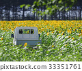 sunflower, sunflowers, sunflower field 33351761