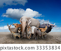 group of asia animals 33353834