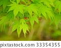 tender green, verdure, maple 33354355