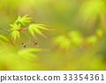 tender green, verdure, maple 33354361