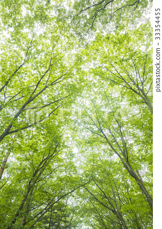 自然生態圖像 33354455