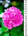 繡球花 花朵 花 33355419