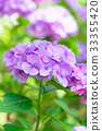 繡球花 花朵 花 33355420