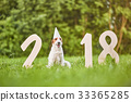 Adorable happy fox terrier dog at the park 2018 33365285